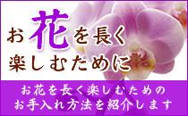 お花のお手入れ方法